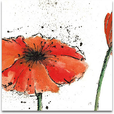 Not A California Poppy On White III preview