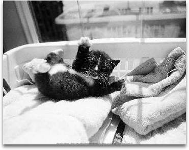Kitten Laundry preview