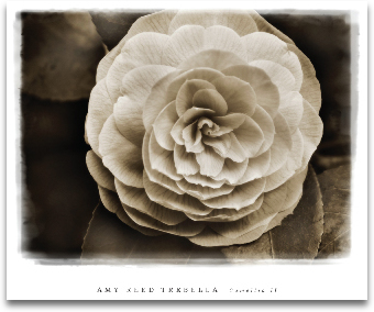 CAMELLIA II preview