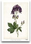 Lavender Florals I