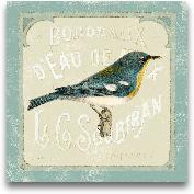 Parisian Bird I - 12x12
