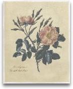 Embellished Sweet Br...<span>Embellished Sweet Briar Rose</span>