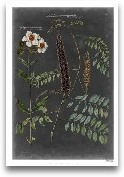 Vintage Botanical Ch...<span>Vintage Botanical Chart V</span>