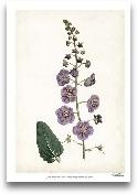 Lavender Florals VI
