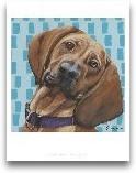 Dlynn's Dogs - Dali