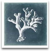 Azure Coral II