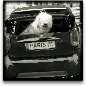 Paris Dog I