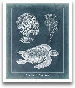 Azure Sea Turtle Study I