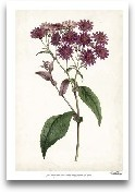 Lavender Florals IV
