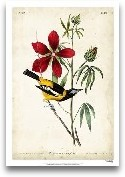 Audubon Bird &amp; B...<span>Audubon Bird &amp; Botanical I</span>