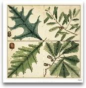 Catesby Leaf Quadran...<span>Catesby Leaf Quadrant III</span>