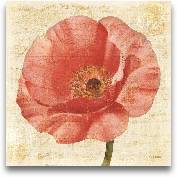 Blushing Poppy On Cr...<span>Blushing Poppy On Cream - 18x18</span>