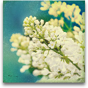 Natures Lilac Blosso...<span>Natures Lilac Blossom - 12x12</span>