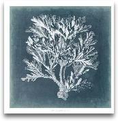 Azure Coral IV