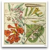 Catesby Botanical Qu...<span>Catesby Botanical Quadrant III</span>