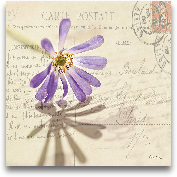 Vintage Letter And P...<span>Vintage Letter And Purple Daisy</span>