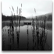 Through The Reeds At...<span>Through The Reeds At Dawn Crop - 18x18</span>