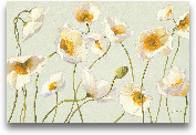 White And Bright Pop...<span>White And Bright Poppies - 36x24</span>