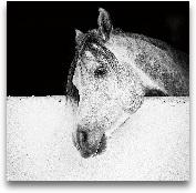 Lonesome Gray - 27x27