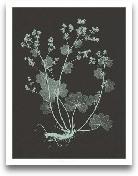 Mint & Charcoal ...<span>Mint & Charcoal Nature Study I</span>