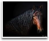 Horse Portrait VII