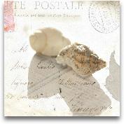 Postal Shells I 12x12