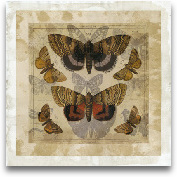 Butterfly Overlay I