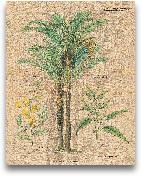 Palm Study II - 11x14