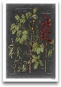 Vintage Botanical Ch...<span>Vintage Botanical Chart III</span>