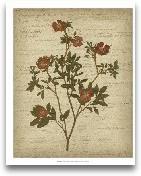 Romantic Pressed Flo...<span>Romantic Pressed Flowers I</span>