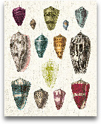 Colorful Shell Assor...<span>Colorful Shell Assortment I - 16x20</span>