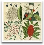 Catesby Botanical Qu...<span>Catesby Botanical Quadrant II</span>