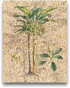 Palm Study I - 11x14