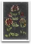 Vintage Botanical Ch...<span>Vintage Botanical Chart I</span>