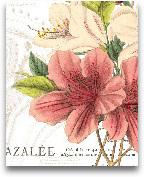Azalee Jardin I