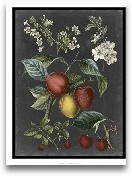 Orchard Varieties III