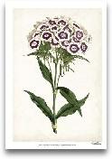 Lavender Florals II