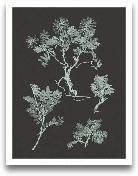 Mint & Charcoal ...<span>Mint & Charcoal Nature Study II</span>