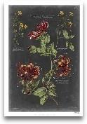 Vintage Botanical Ch...<span>Vintage Botanical Chart II</span>