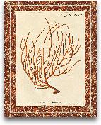 Gorgonia Miniacea Ma...<span>Gorgonia Miniacea Marble - 16x20</span>