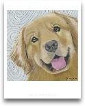Dlynn's Dogs - Cosmo