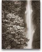 Multnomah Falls - 22x28