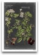 Vintage Botanical Ch...<span>Vintage Botanical Chart VI</span>