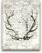 Regal Antlers On New...<span>Regal Antlers On Newsprint I - 11x14</span>