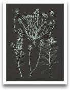 Mint & Charcoal ...<span>Mint & Charcoal Nature Study III</span>