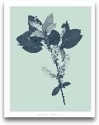 Indigo & Mint Bo...<span>Indigo & Mint Botanical Study V</span>