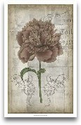 French Floral IV