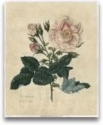 Embellished Frankfor...<span>Embellished Frankfort Rose</span>