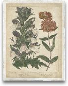 Enchanted Garden IV