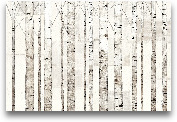 Birch Trees On White...<span>Birch Trees On White - 36x24</span>